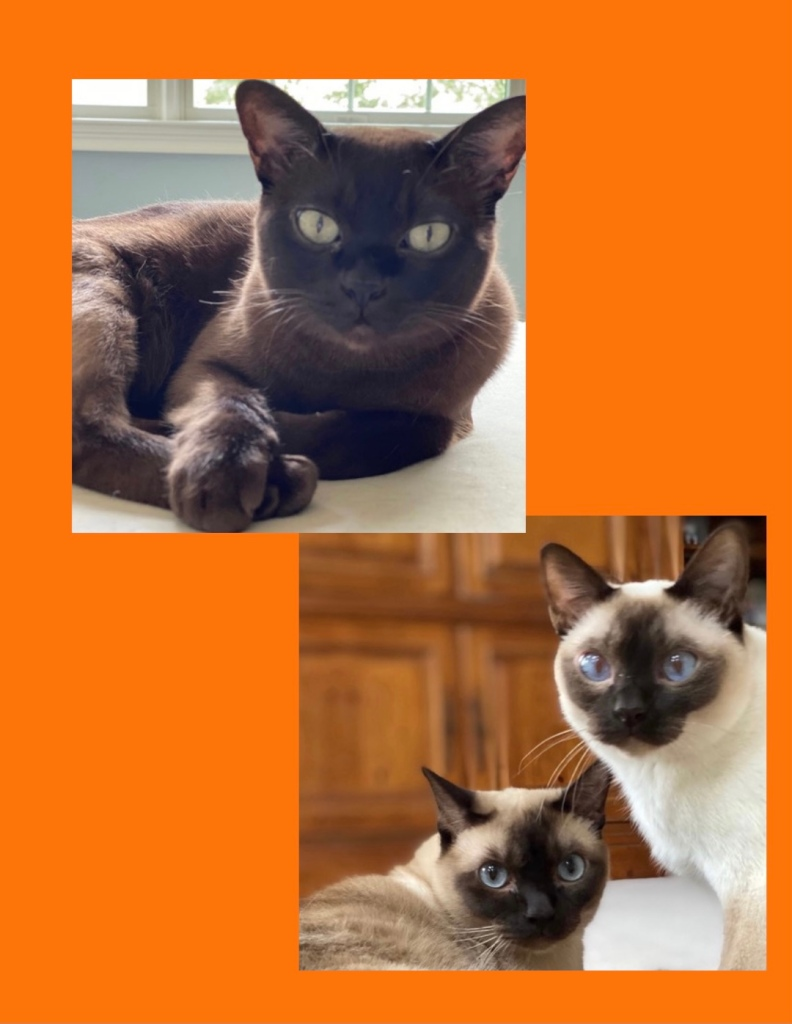 Testimonial for Shannon of Animal Love Languages from Cathy Hunter and her three cats Hotshot, Maverick and Chase