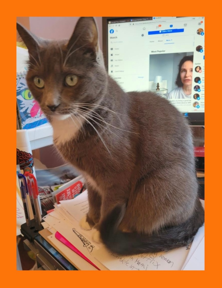 Testimonial for Shannon of Animal Love Languages from Lonnie and Lois the cat