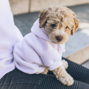fluffy puppy sharing sweater with person animal love languages