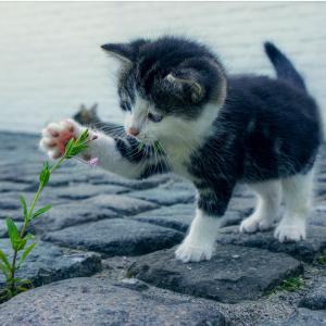 kitten with flower animal love languages