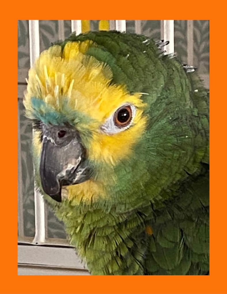 Testimonial for Shannon of Animal Love Languages from LW and Otis the green naped Amazon parrot