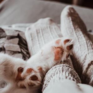 cat paws human feet animal love languages