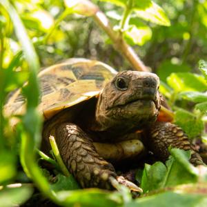 tortoise in grass animal love languages