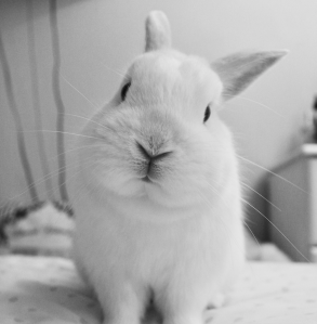 bunny animal love languages