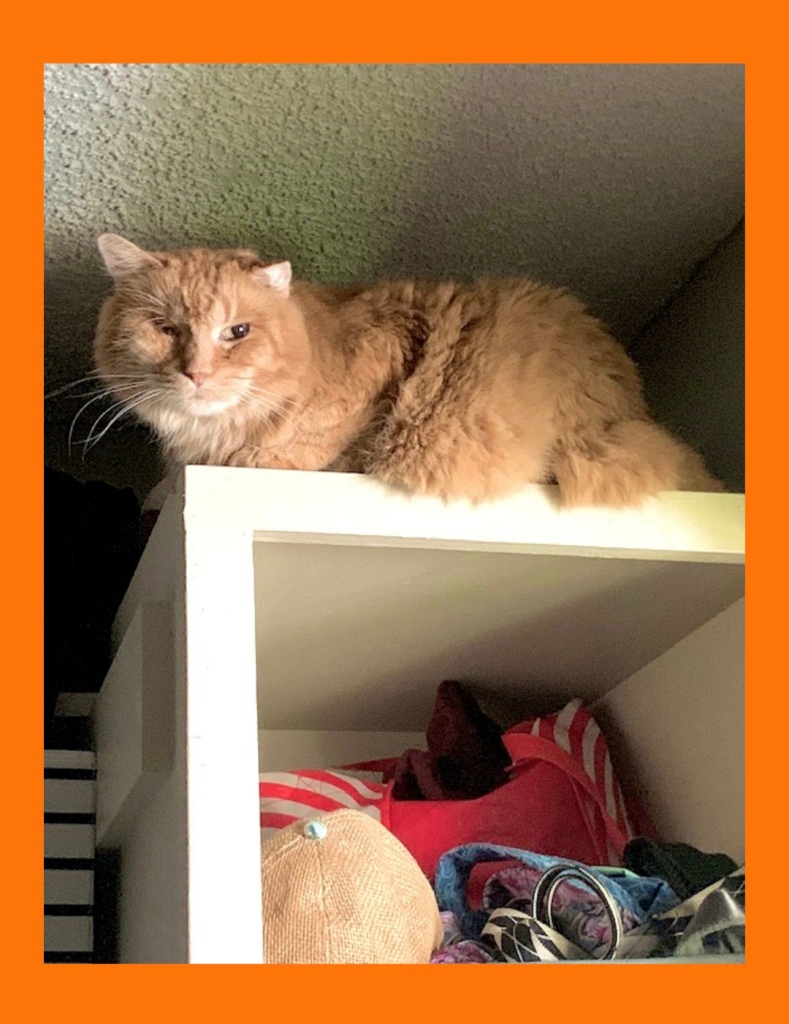 Testimonial for Shannon of Animal Love Languages from Corrine Hufford and Louie the rescue cat