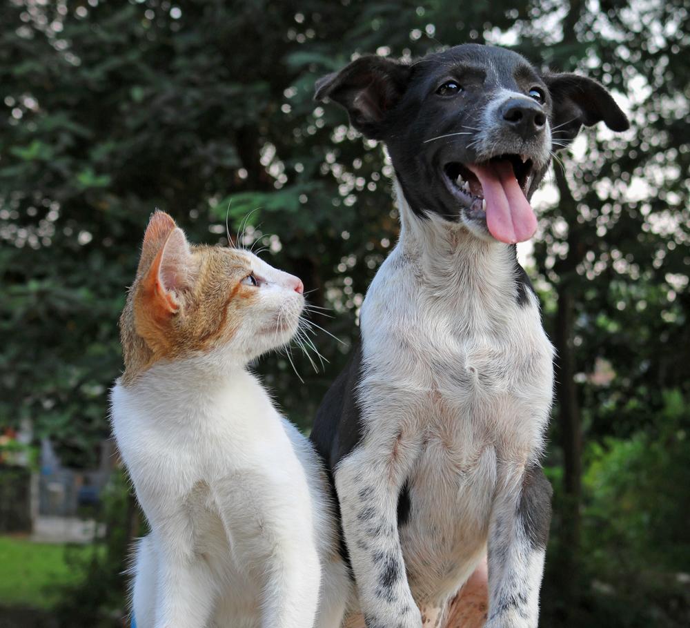 Dog Cat Talk animal love languages