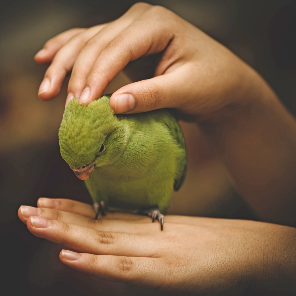 quaker parrot getting neck feather scratches - animal communication with Shannon of Animal Love Languages