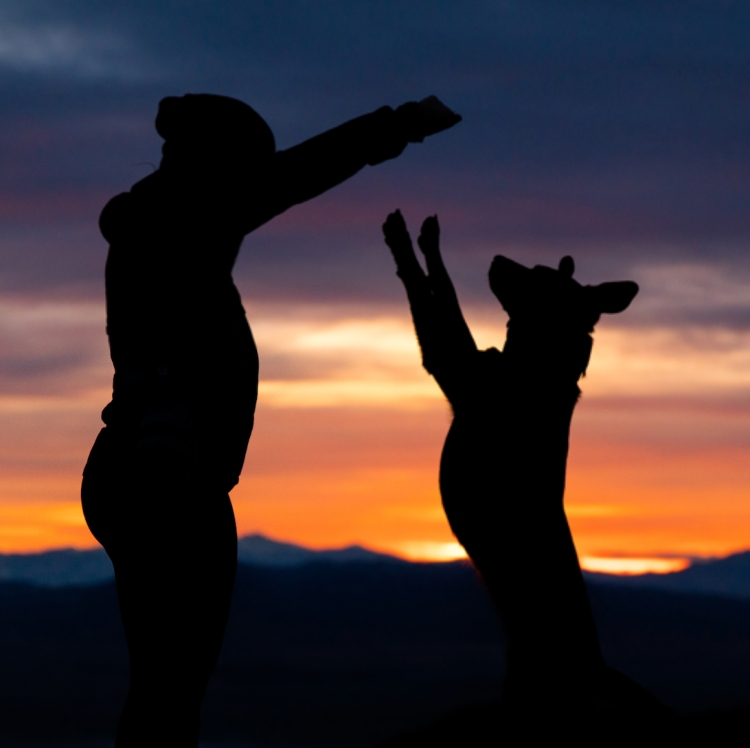 person and dog in silhouette at sunset - animal communication with Shannon of Animal Love Languages