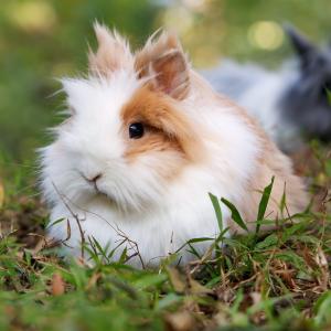 bunny rabbit animal love languages