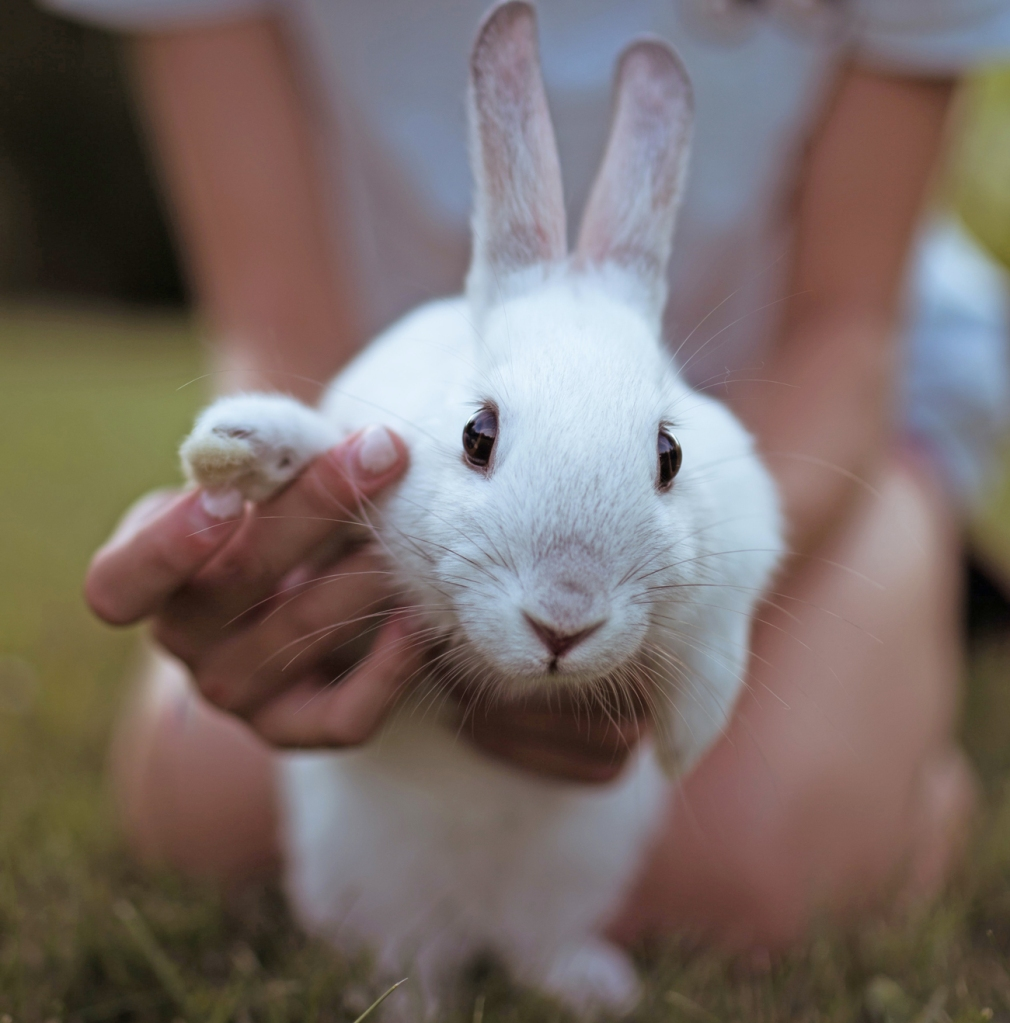 white bunny touching woman's hand - animal communication with Shannon of Animal Love Languages