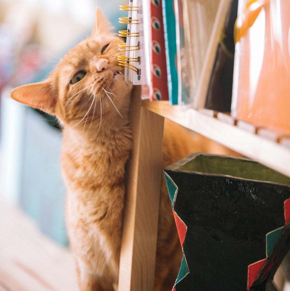 Cat scratching against wood - animal communication with Shannon of Animal Love Languages