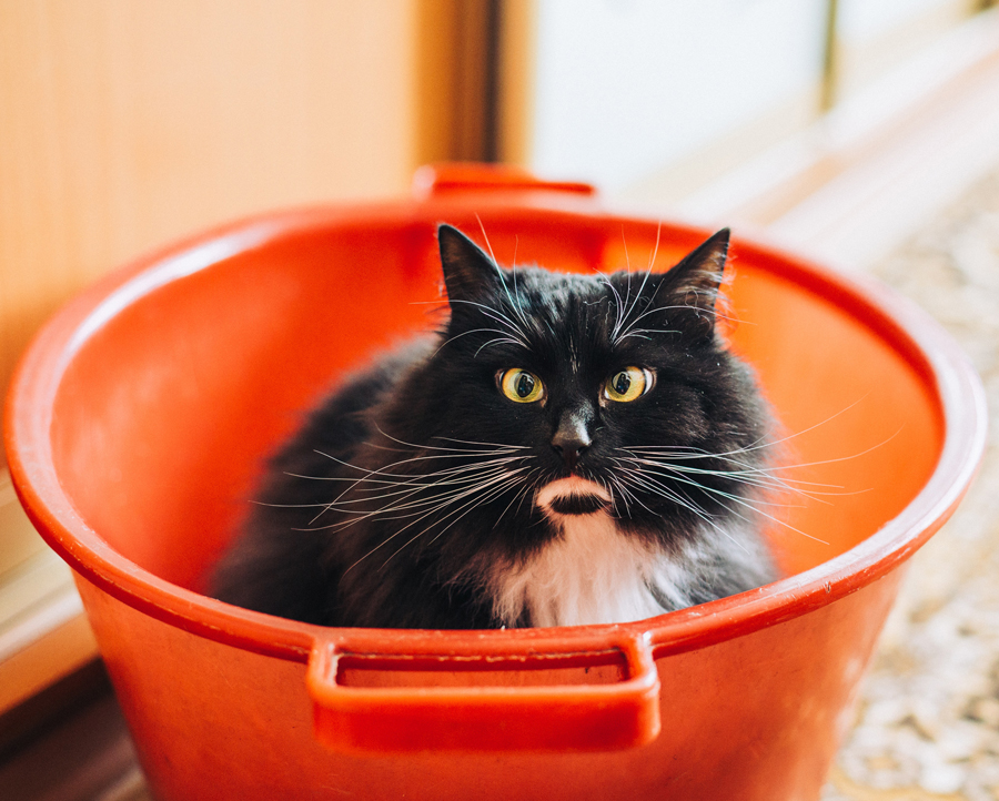 cat in bucket - animal communication with Shannon of ANimal Love Languages
