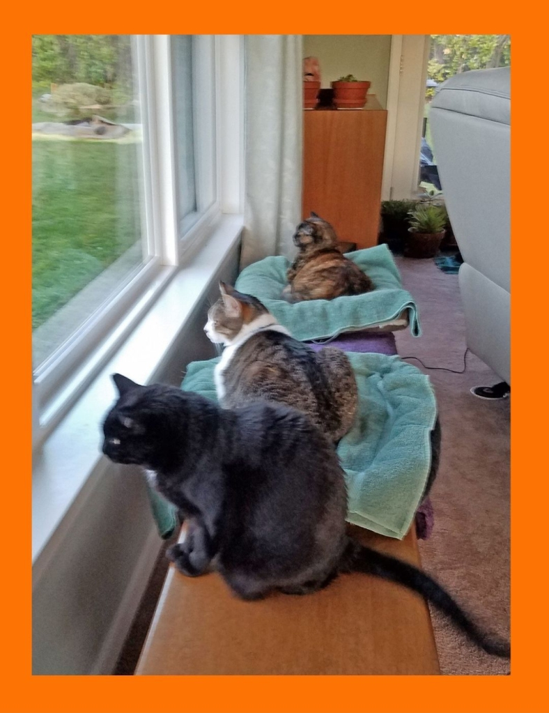 Testimonial for Shannon of Animal Love Languages from Nina P and her three cats Kitty Carlyle, Ellie and Apollo