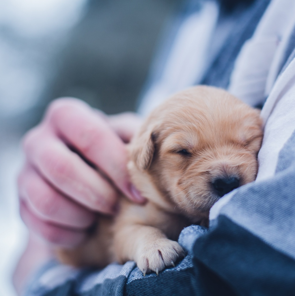 puppy hug hamster animal love languages