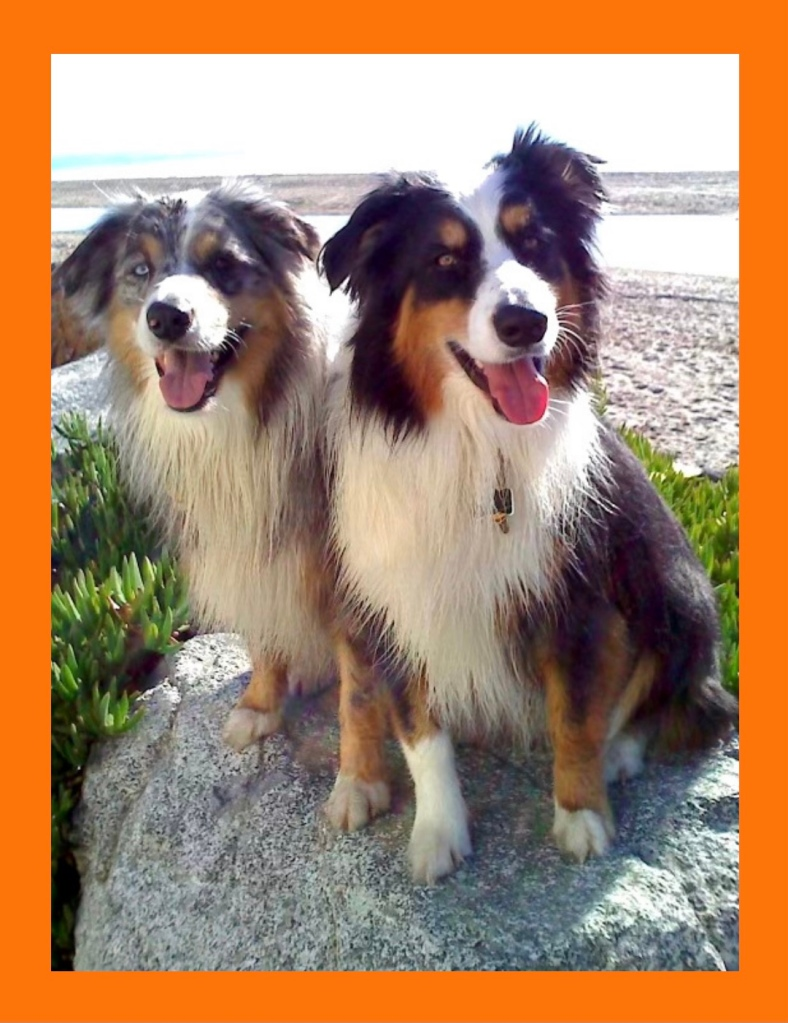 Testimonial for Shannon of Animal Love Languages from Sasha and Moske and Rex the Australian Shepherd dogs