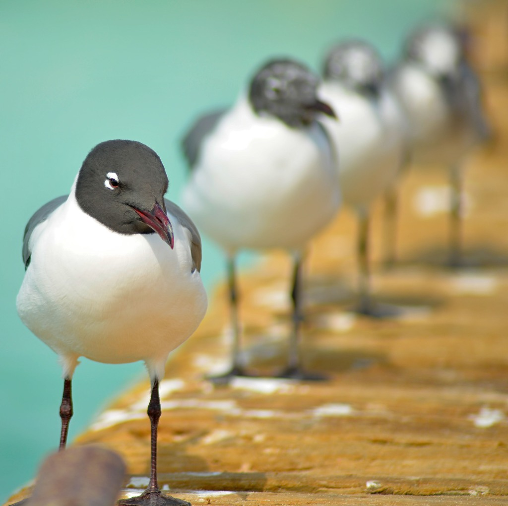 flock of seagulls along the dock - animal communication with Shannon of Animal Love Languages