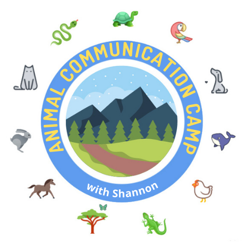 animal communication camp with Shannon Cutts of Animal Love Languages
