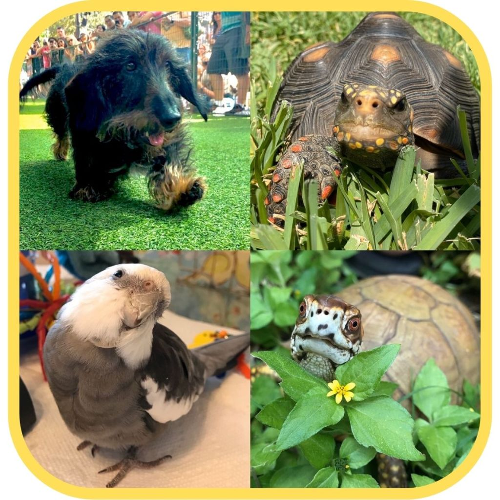 Flash Gordon the dachshund, Malti the redfoot tortoise, Bruce the rescued 3-toed box turtle and Pearl the cockatiel with Shannon Cutts of Animal Love Languages