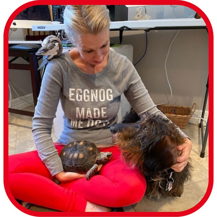 Shannon Cutts of Animal Love Languages with Pearl the cockatiel, Malti the redfoot tortoise and Flash Gordon the wire-haired dachshund
