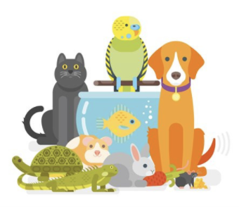 Interspecies Family Audit by animal sensitive and intuitive Shannon Cutts of Animal Love Languages