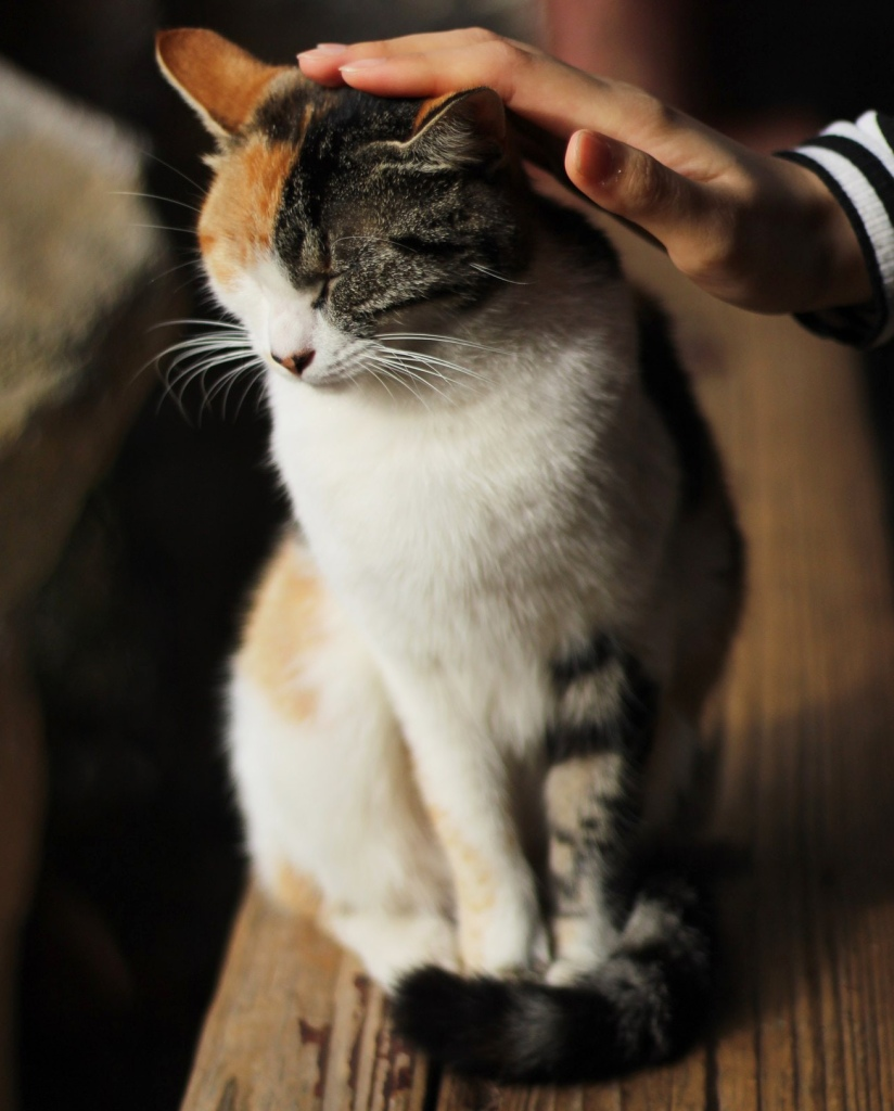 animal Reiki on a cat with Shannon Cutts of Animal Love Languages